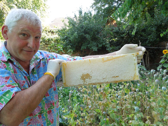 John Aschenbrenner in his garden with a frame of capped honey.