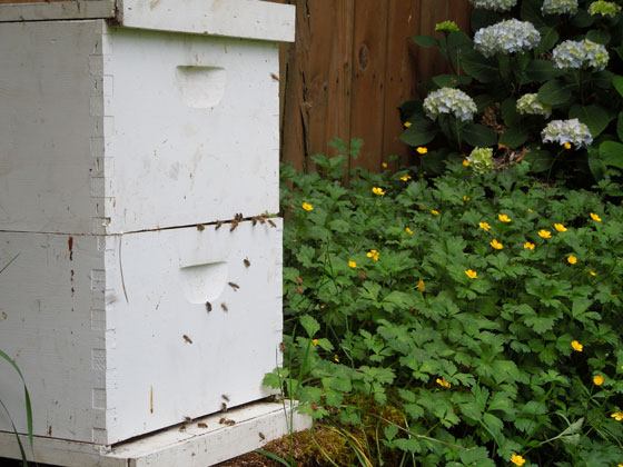 Bee hive with buttercups.